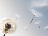 Allergologie e immunologia clinica
