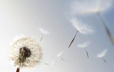 Presso il centro sanitario Koinos di Pistoia è possibile sottoporsi a visite allergologiche ed effettuare le prove allergiche.